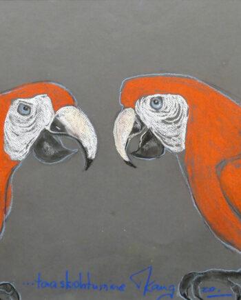 Colorfulbirds, birds, wildlife cacadoo, blue, red, parrots, rainforest, wildlife, estonianartist, taunokangro