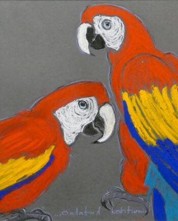 Colorfulbirds, birds, wildlife cacadoo, blue, red, parrots